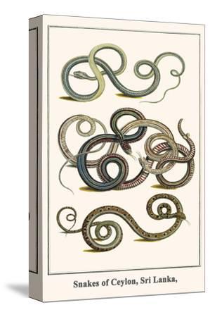 Snakes of Ceylon, Sri Lanka,