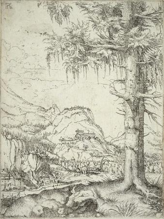 The Large Spruce, C.1520