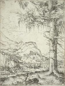The Large Spruce, C.1520 by Albrecht Altdorfer