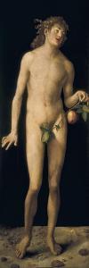 Adam by Albrecht D?rer