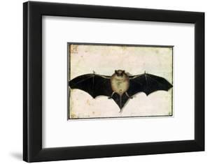Bat, 1522 by Albrecht D?rer