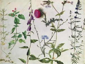 Eight Studies of Wild Flowers by Albrecht D?rer