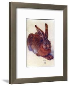 Field Hare by Albrecht D?rer