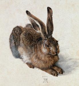 Hare, 1502 by Albrecht D?rer