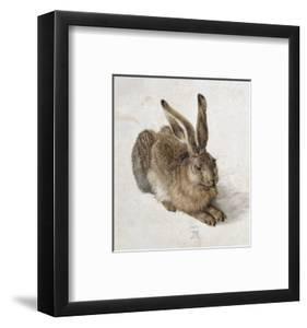 Hare by Albrecht D?rer