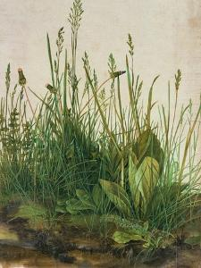 Large Piece of Turf, 1503 by Albrecht D?rer