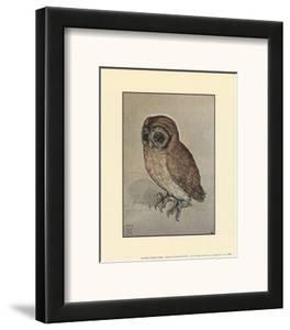 Little Owl by Albrecht D?rer