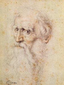 Portrait of a Bearded Old Man by Albrecht D?rer