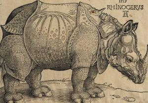 Rhinoceros, 1515, Etching by Albrecht D?rer
