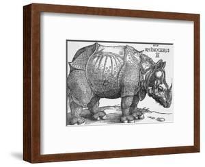 Rhinoceros by Albrecht D?rer