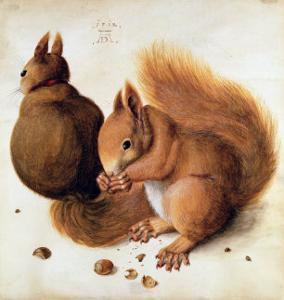 Squirrels, 1512 by Albrecht D?rer