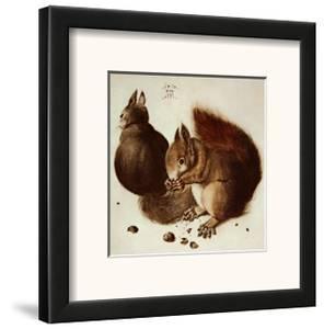 Squirrels by Albrecht D?rer