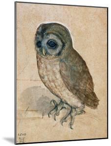 Sreech-Owl, 1508 by Albrecht D?rer