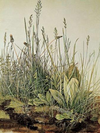 Tall Grass by Albrecht D?rer