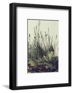 The Large Piece of Grass by Albrecht D?rer