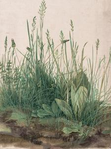 The Large Piece of Turf, 1503 by Albrecht D?rer