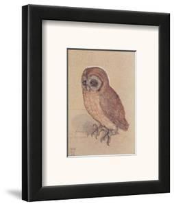 The Owlet by Albrecht D?rer