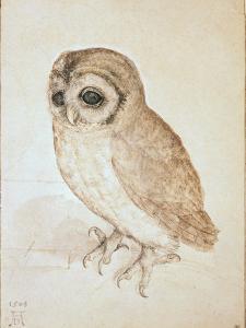 The Screech Owl by Albrecht D?rer