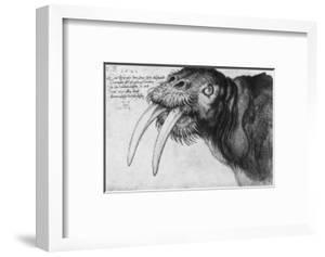 Walrus, British Museum, London by Albrecht D?rer