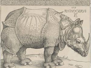 The Rhinoceros, 1515 by Albrecht Drer