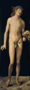 Adam by Albrecht Dürer