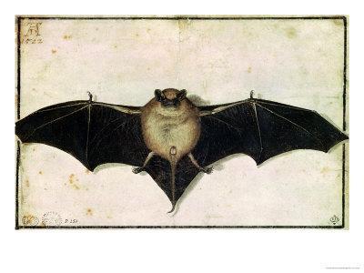 Bat, 1522