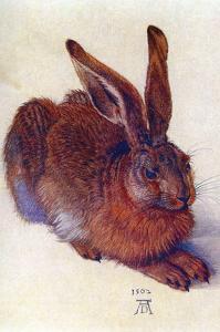 Field Hare by Albrecht Dürer