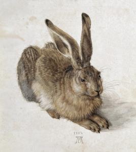 Hare by Albrecht Dürer