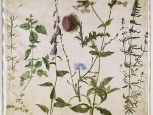 Huit études de fleurs des champs by Albrecht Dürer
