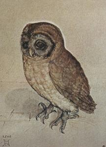 Little Owl by Albrecht Dürer