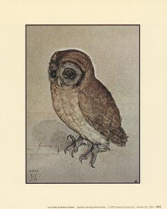 Little Owl by Albrecht Dürer