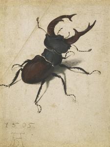 Stag Beetle, 1505 by Albrecht Dürer or Duerer