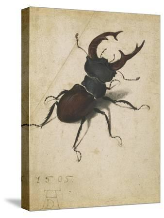 Stag Beetle, 1505