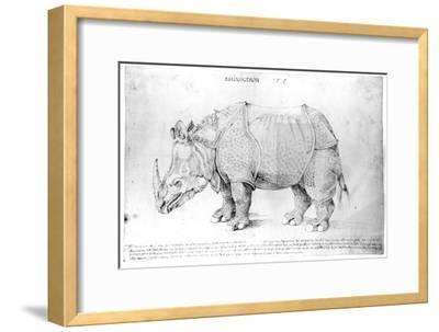 Rhinoceros, 1515