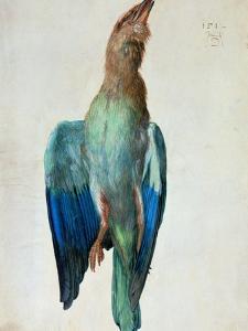 Roller (Bird), 1512 by Albrecht Dürer