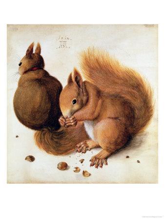 Squirrels, 1512