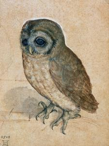 Sreech-Owl, 1508 by Albrecht Dürer