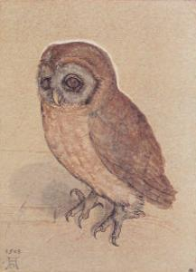 The Owlet by Albrecht Dürer
