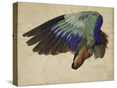 The Right Wing of a Blue Roller, 1524