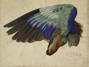 The Right Wing of a Blue Roller, 1524 by Albrecht Dürer
