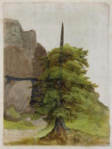 Tree, about 1506 by Albrecht Dürer