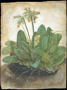 Tuft of Cowslips by Albrecht D¼rer by Albrecht Dürer