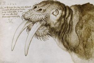 Walrus, around 1515. Pen and watercolour on paper, 20,9 x 30,9 cm. by Albrecht Dürer