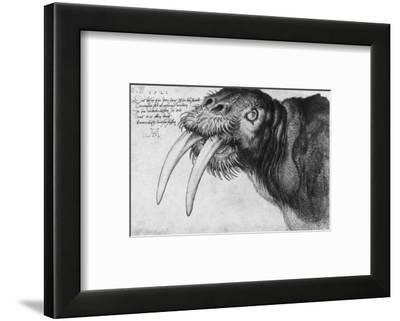 Walrus, British Museum, London by Albrecht Dürer