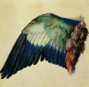 Wing of a Blue Roller, 1512 by Albrecht Dürer