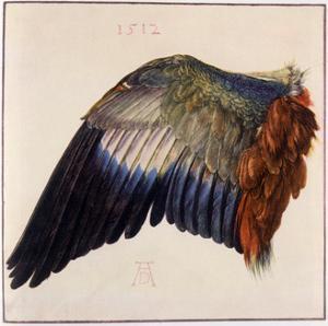 Wing by Albrecht Dürer