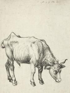 Young Bull, C.1493 by Albrecht Dürer