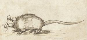 Mouse, C. 1480-1520 by Albrecht Durer