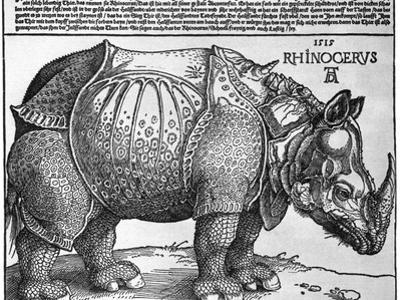 Rhinoceros, Print Given to Maximilian I by the King of Lisbon, 1515 by Albrecht Durer