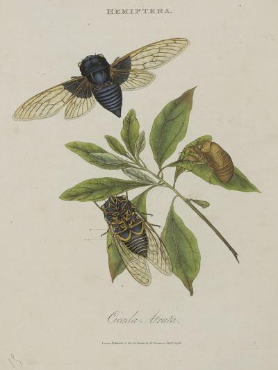 Album Donovan : an epitome of the natural history of insects in China-Edward Donovan-Giclee Print